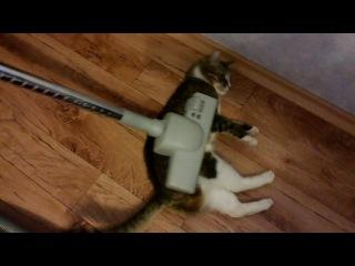 смотреть всем ахаха котэ котейка пылесос ахаха ржач